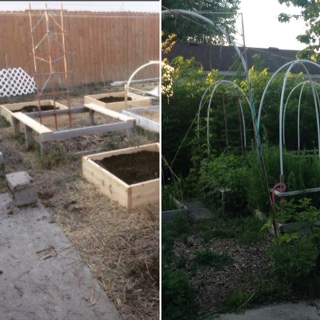 @015 to 2017 before and after raised beds.jpg