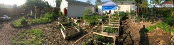 raised beds and apple trees spring 2016