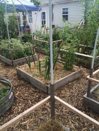 raised beds spring 2016
